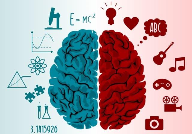 a criatividade ocorre do lado direito do cérebro